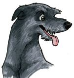 Scottish_Deerhound.jpg
